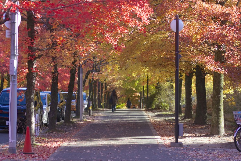 Aki - estação do outono no japão