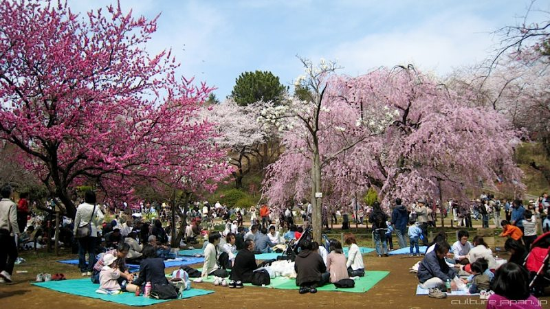 Hướng dẫn hanami - thưởng thức những bông hoa tại Nhật Bản
