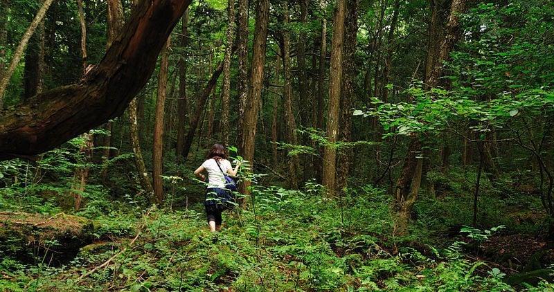 O estrangeiro que desrespeitou uma nação - aokigahara floresta japao 2