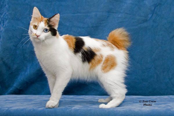 Gatos no Japão - Entendendo a paixão japonesa por gatos -  1