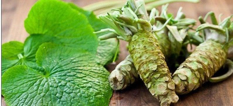 Wasabi - raiz forte
