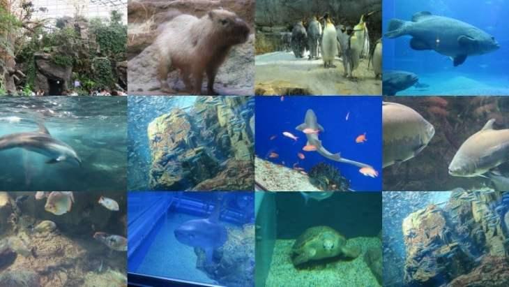 aquariofotos