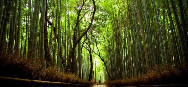 Os 50 mais populares pontos turísticos do Japão - arashiyama 1