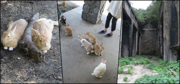Okunoshima - Isla Conejo