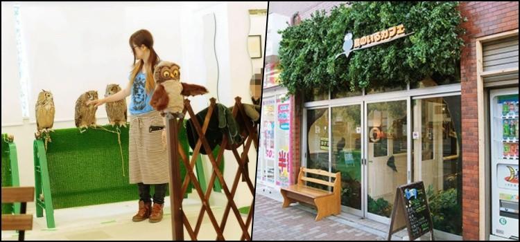 Fukuro Cafe - Conheça o Café das corujas