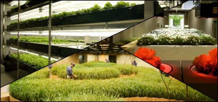 ¿Una granja dentro de un edificio? Conoce a pasona o2