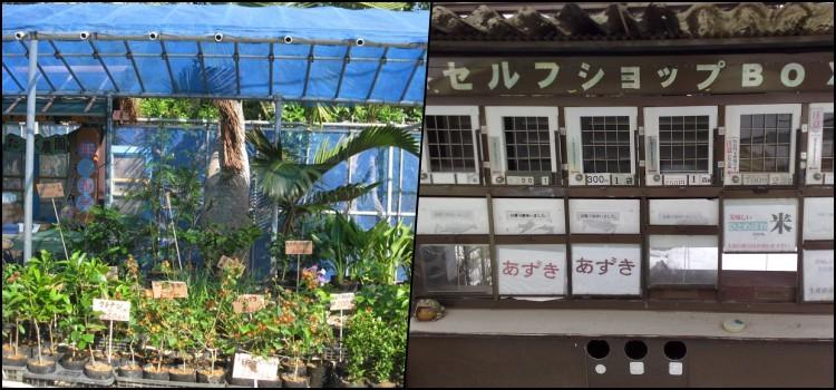 Mujin Hanbai - Bancas de feira sem vendedores no Japão