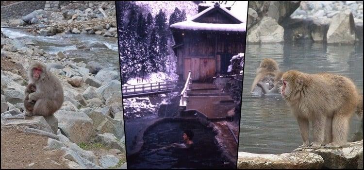 Parque jigokudani - o onsen dos macacos