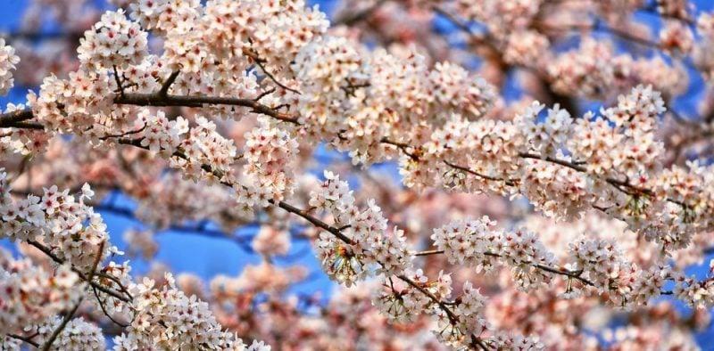 Dias, meses e anos em japonês