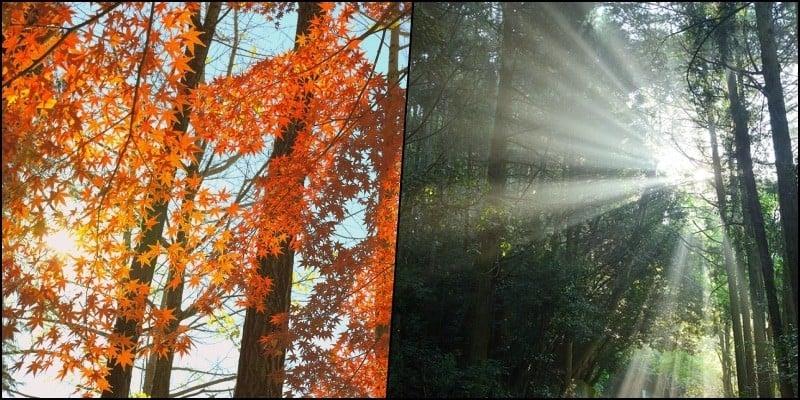 Komorebi - A luz do sol através das árvores