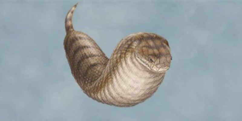 Tsuchinoko - yokai que parece uma serpente gorda