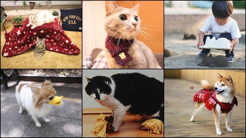Os produtos Japoneses mais bizarros do Japan Trend Shop - kotatsu cats 6