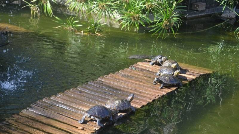 4 coisas no Rio de Janeiro que agradam os turistas japoneses - jardim botanico 2