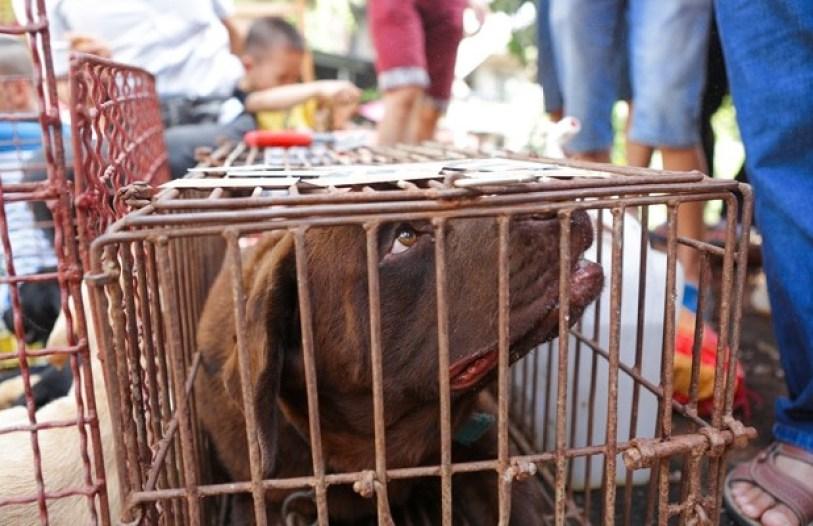 Consumo da carne de cachorro - cachorro preso