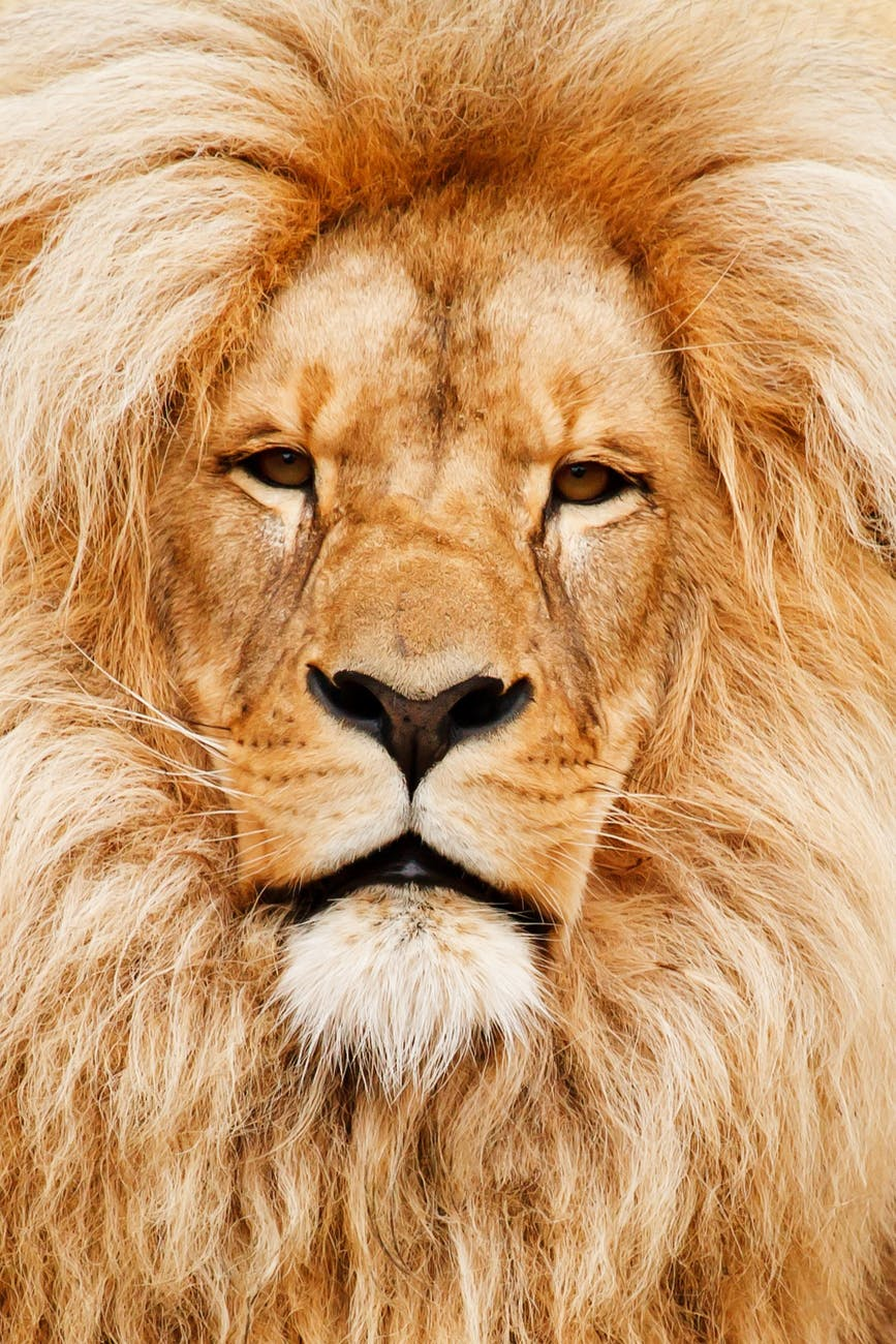 The vision of a lion sees potential