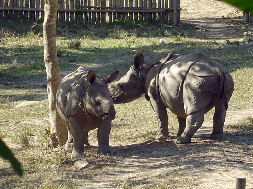 Kaziranga Centre for Wildlife Rehabilitation and Conservation