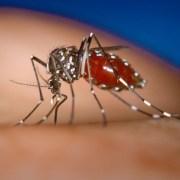 Chikungunya virus new concern for travellers
