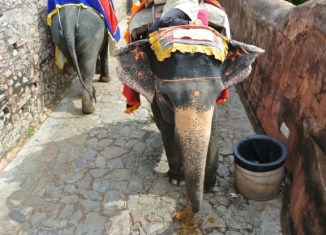 The face of an elephant in India.