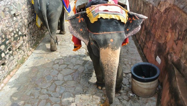 Animals in India: Entertainment or living things?