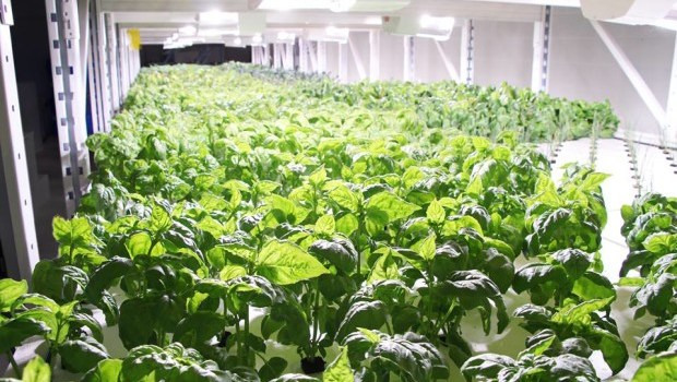Aqua Greens: Taking sustainable technology to the next level