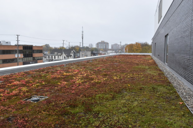 Carbon tax: Humber Office of Sustainability happy with environmental effort