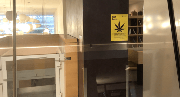 Students divided by campus cannabis ban