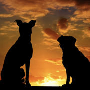 Non-killing animal shelters help reduce euthanasia around the city