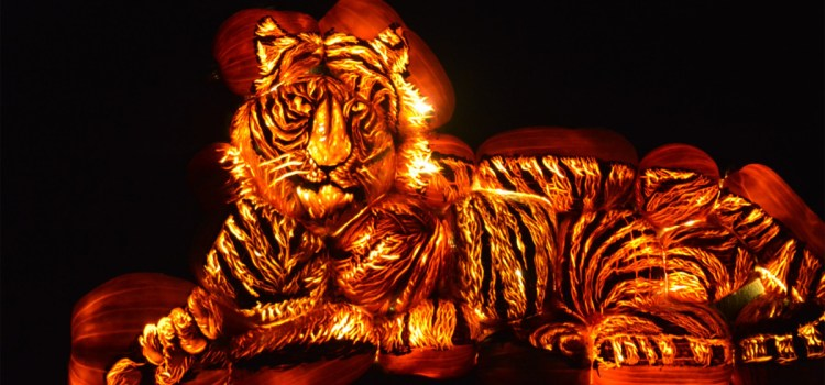Jack-O-Lanterns Come Alive: 'Pumpkins After Dark' Puts A New Twist On Halloween Fun