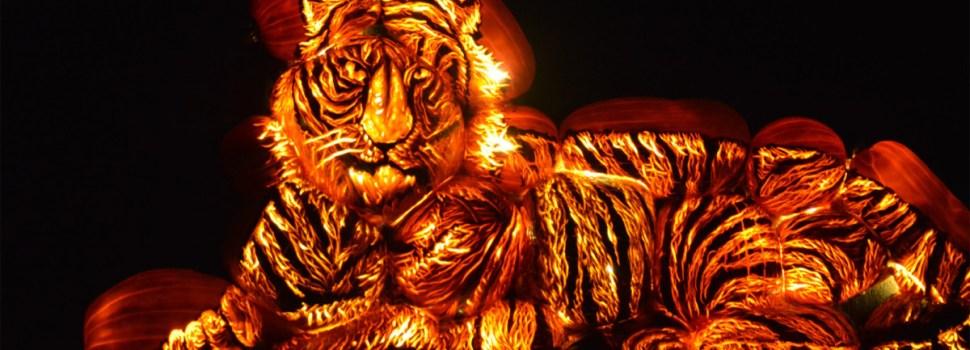 Jack-O-Lanterns Come Alive: 'Pumpkins After Dark' Puts A New Twist On Halloween Fun