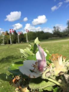 Fra et æbletræ ned mod kunstnergården