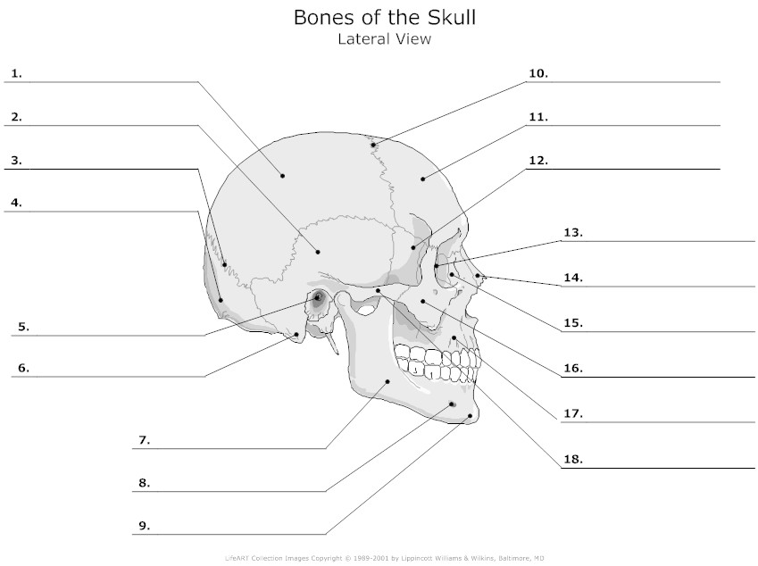 Human Anatomical Position Diagram Blank