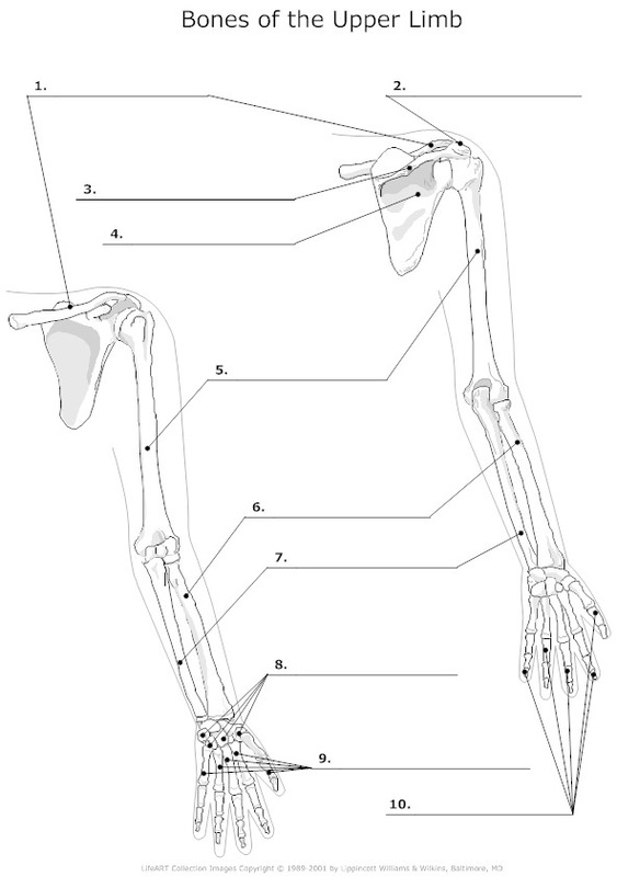 wrist and hand unlabeled diagram one to many relationship appendages - skeletal learning