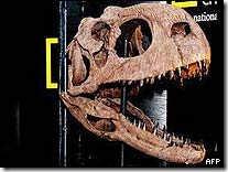Species_Dinohead