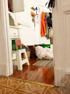 Pierogi cat hiding bright