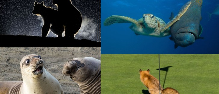 funny-wildlife-photo-awards-winners-2017