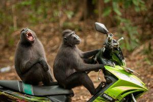 monkey-escape-wildlife-photography-awards-winners-2017