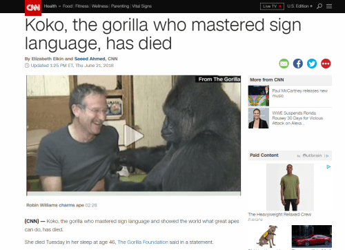 CNN screenshot with title Koko mastered sign language