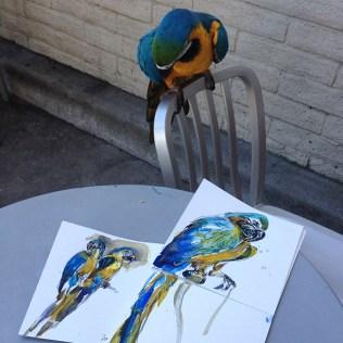 macaw_elvis_looking