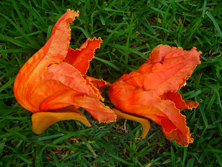 Photograph- Organic (unretouched), 10.19.09