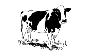 cow drawing draw drawings animals animal sketchbook challenge sketchbooknation illustration wolf discover
