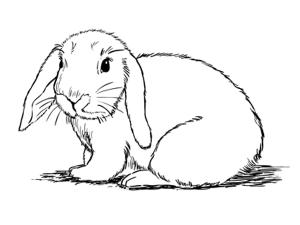 drawing bunny rabbit draw scary animal step easy mammal standing drawings sketchbooknation steps animals realistic simple sketchbook challenge cartoon tutorials
