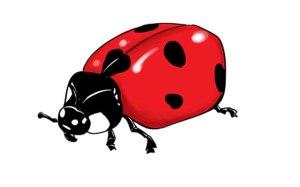 ladybug drawing draw simple step challenge sketchbook sketchbooknation cartoon drawings ladybugs tutorials easy clipartmag