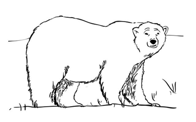 How to Draw a Polar Bear Step by Step