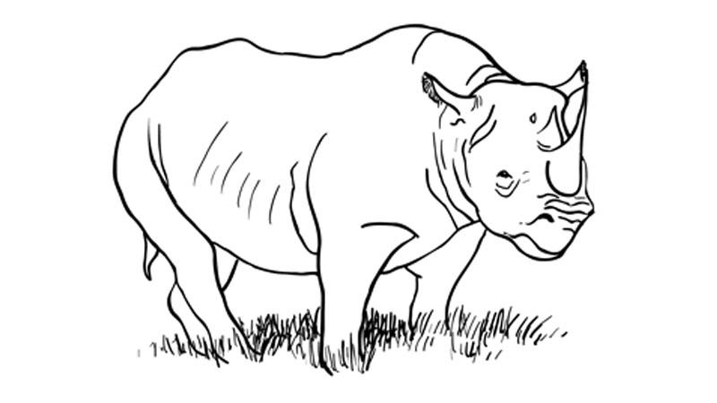 Drawing tutorials animals