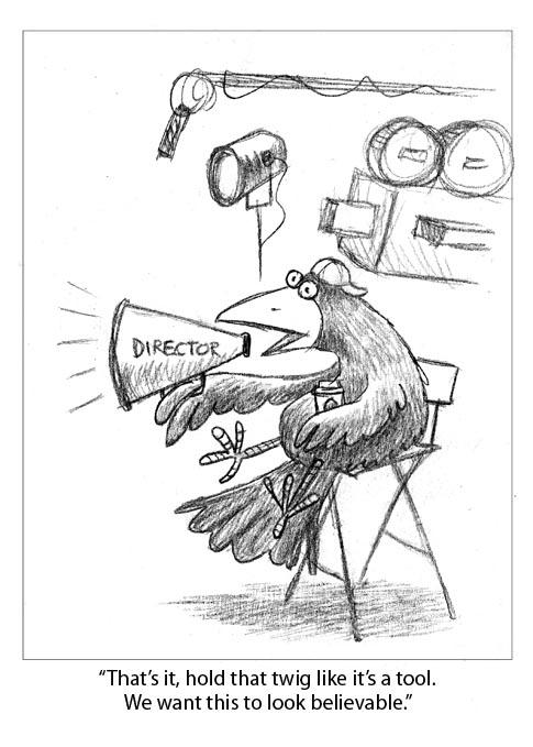 crow-cam1.jpg