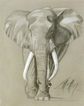 African Elephant - Collection of Seth Levy   Dallas, Texas