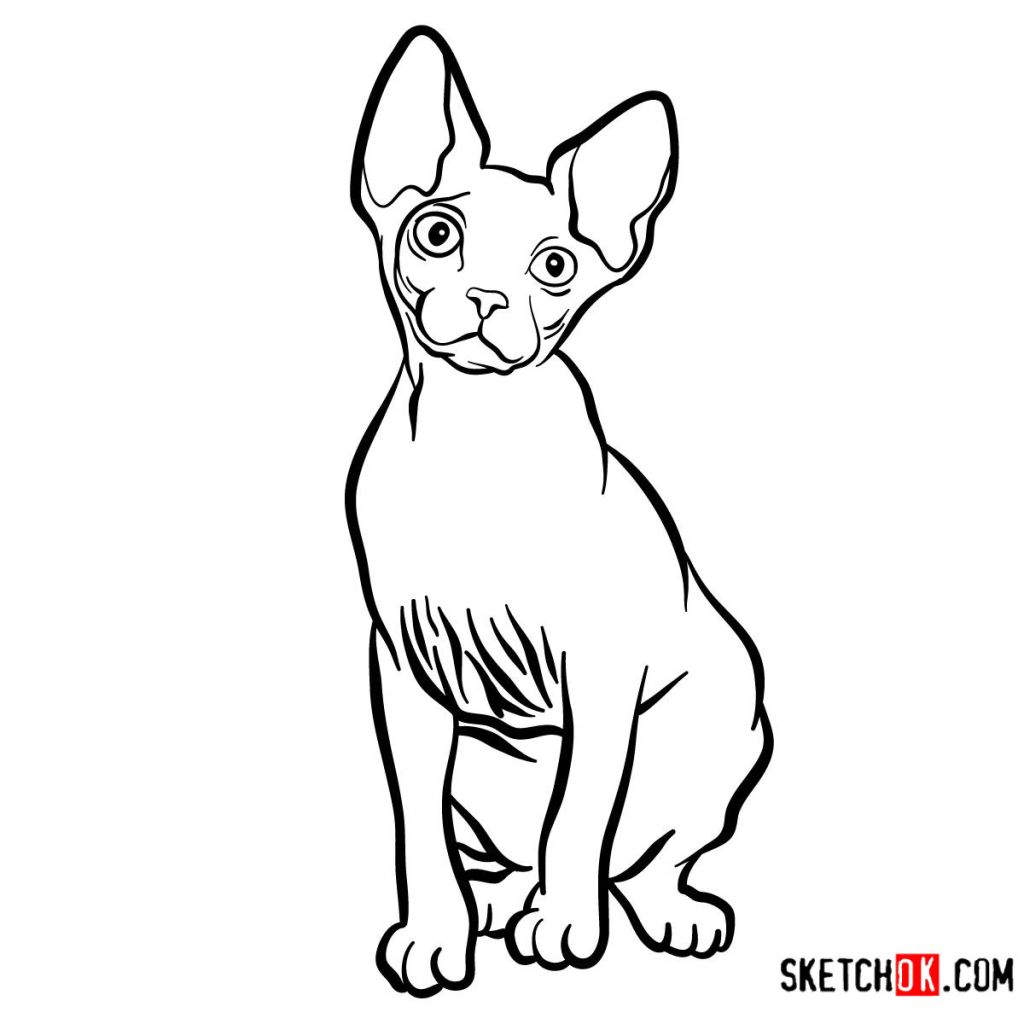 How to draw the Sphynx cat