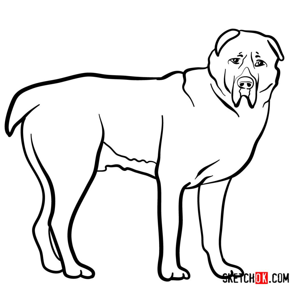 How to draw the Central Asian Shepherd Dog