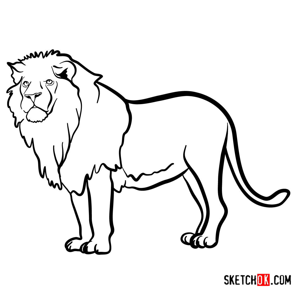 Lion Archives Sketchok Step By Step Drawing Tutorials