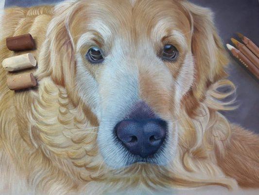 Woody the Labrador Pet Portrait
